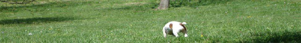 du-bresil.com header image 2