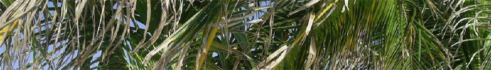 du-bresil.com header image 3